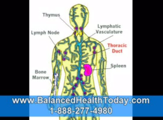Lymphatic System Circulation, Lymphatic System